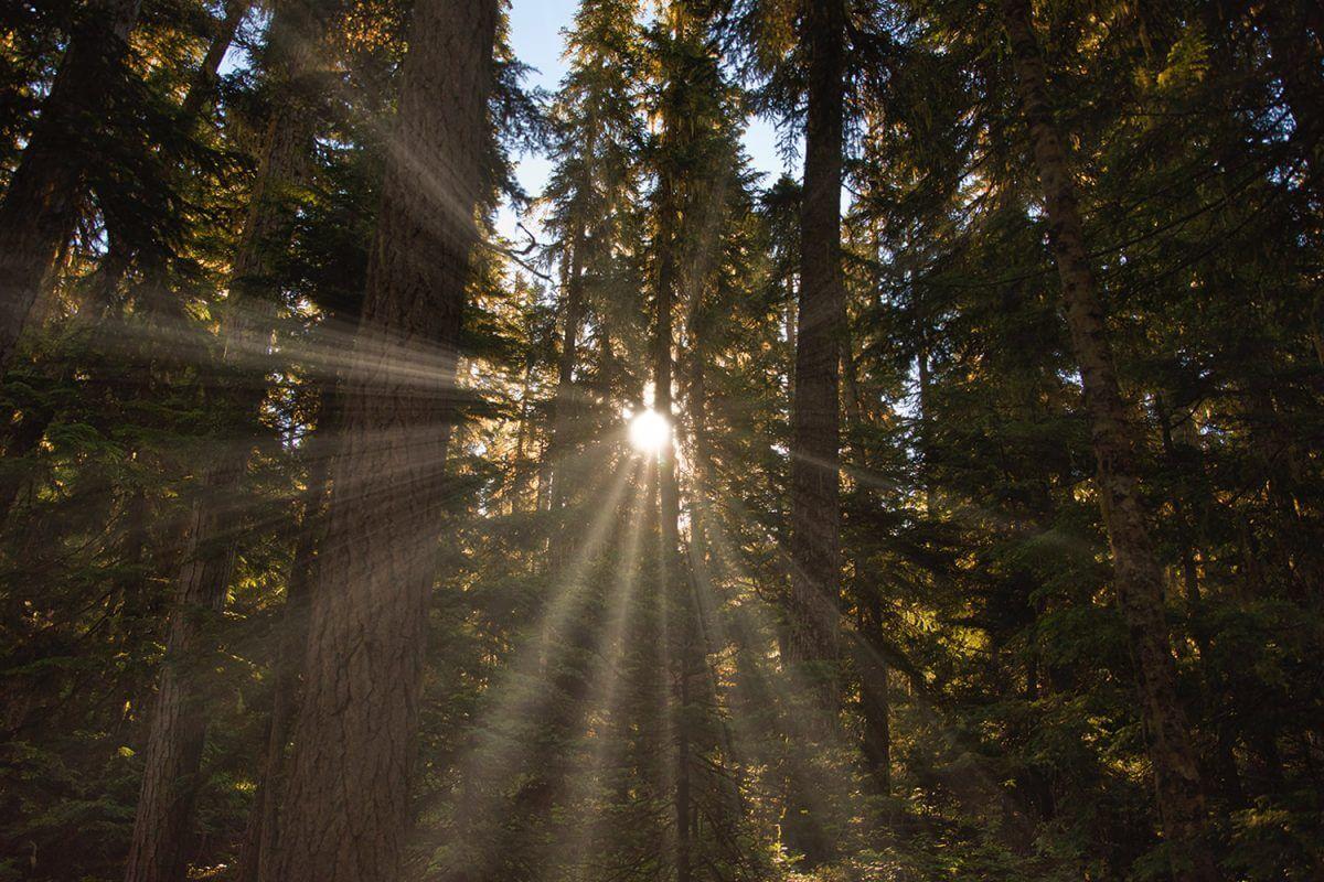 lucera-cuales-son-energias-renovables